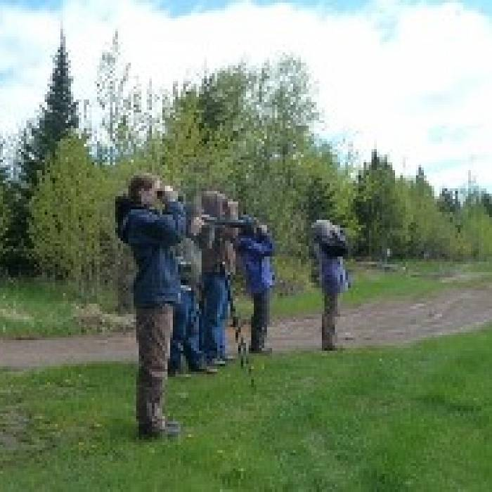 Teaser image for Gunflint Trail Spring Birding Experience: Up the Trail