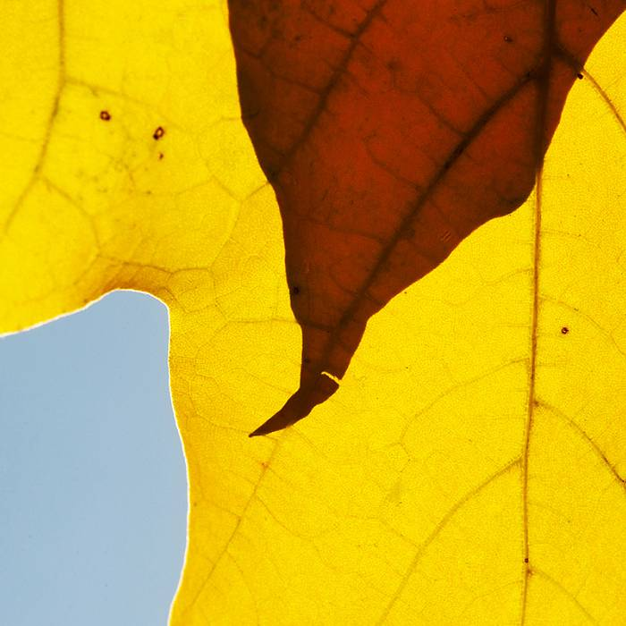 Teaser image for Grand Marais & Beyond Nature Photography Workshop: Fall Equinox Session
