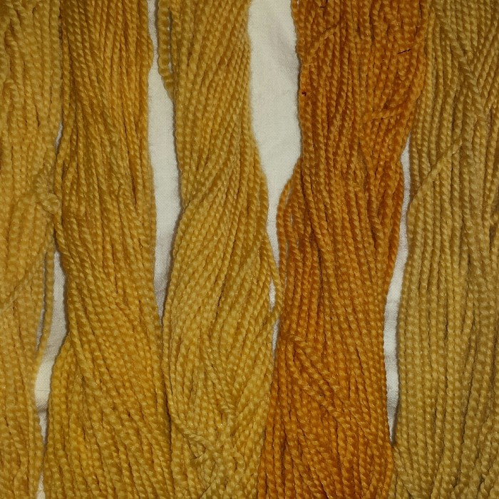 Yarn dyed with orange hawkweed