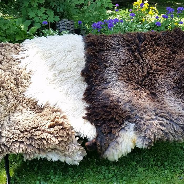 Teaser image for Raw Felted Fleece: A New Approach to the Sheepskin Blanket