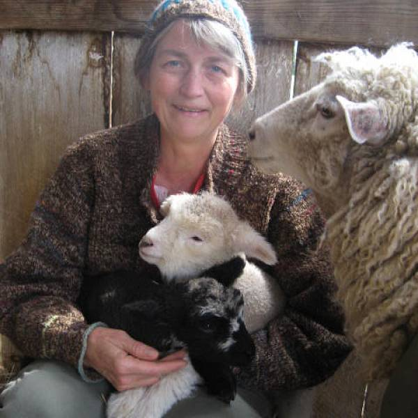 Image for Lunch & Learn: Sheep and Wool through Story and Song